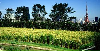 Roppongi garden